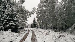 Flink pak sneeuw op komst op Ardennentoppen, KMI waarschuwt voor veel neerslag in oosten