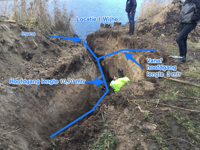Bij Wijhe werden twee meterslange bevergangen aan de oevers van de IJssel ontdekt. Die zijn uitgegraven en gedicht door het waterschap.