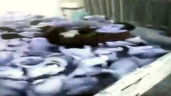 Spaanse jonge boer verplettert met opzet tientallen biggetjes