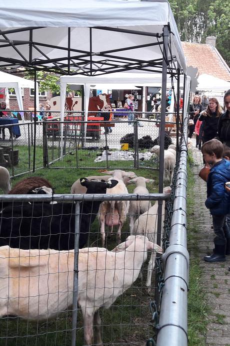 Schaapscheerfeest kinderboerderij Klepperhoeve druk bezocht