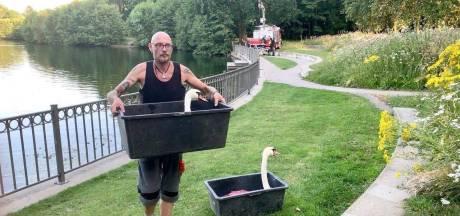 """Zieke Brugse zwaan van het water gehaald: """"Zou niet om blauwalgen gaan"""""""