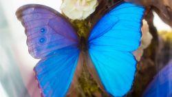 Wie steelt nu een vlinder? Deze vrouw werd op heterdaad betrapt