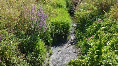 Vondelbeek quasi volledig droog door aanhoudende hitte