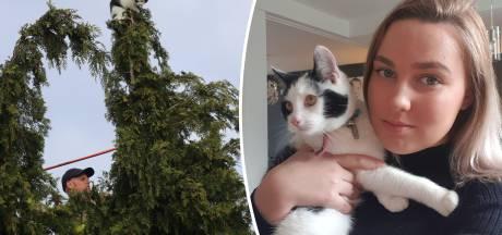 Schreeuwende kat Bella na ijskoude nacht gered uit boomtop in Apeldoorn: 'Het zag er heel eng uit'