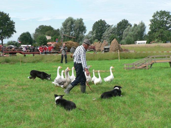 Johan Engelbert uit Empel showt gedresserde ganzen en border collies