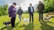 Hondenclub mag als eerste speelweide in  gebruik nemen