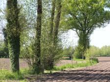 Bosman wil herkansing spelregels voor bomenkap