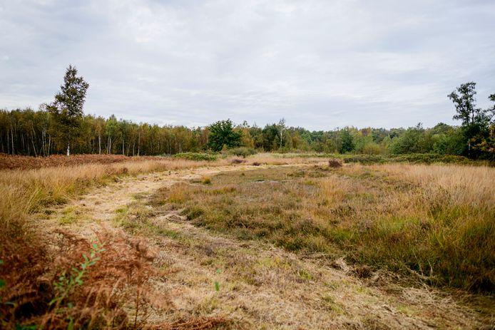 Het Aamsveen dreigt uit te drogen. Landschap Overijssel probeert dat tegen te gaan.