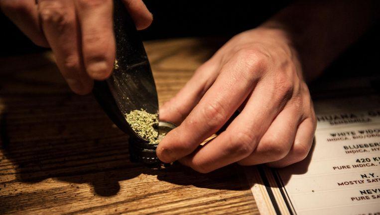 De opvattingen bij de liberalen over wiet lopen uiteen van een harde lijn tot volledige legalisering. Beeld Mats van Soolingen