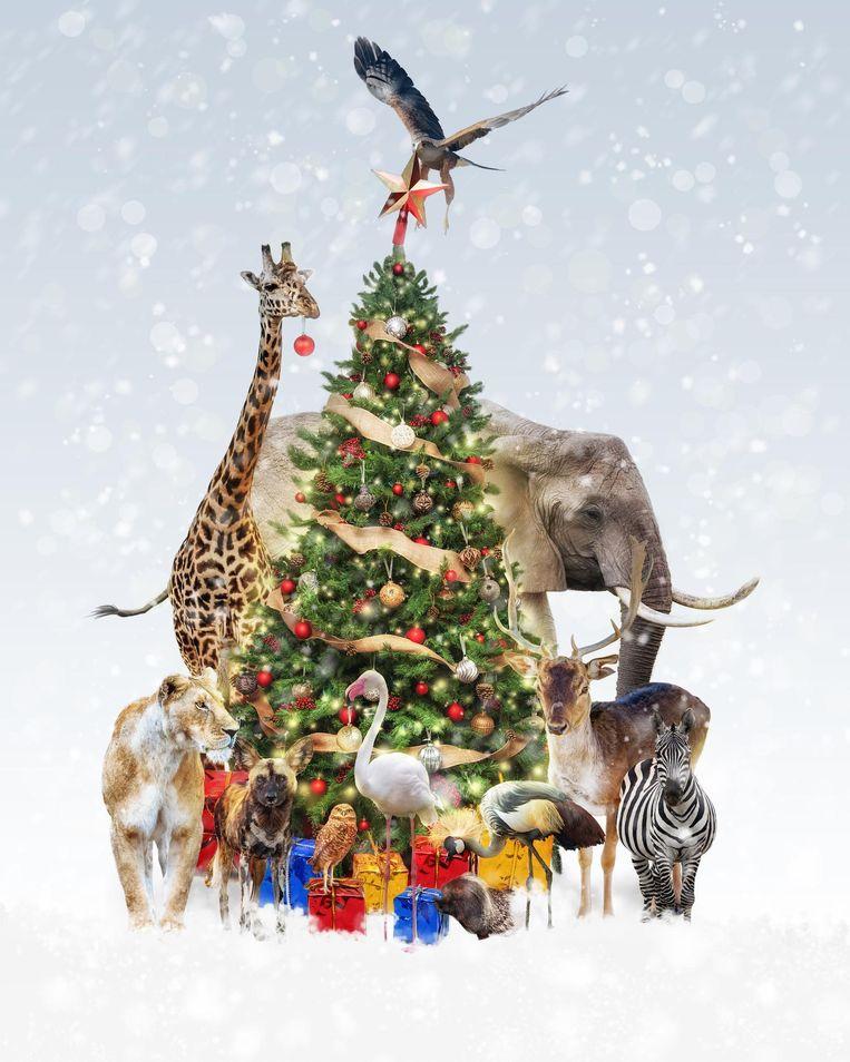 Kerst vieren tussen de wilde dieren, waarom ook niet? Beeld Shutterstock