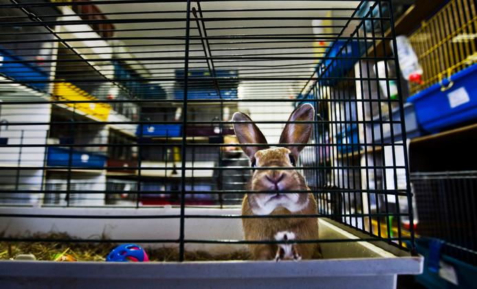 Ter illustratie. Een konijn in een kooi.