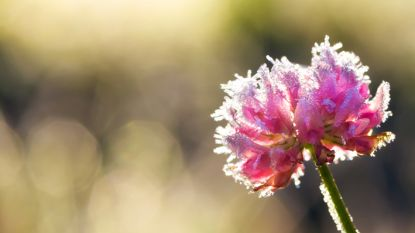 Negeer die lentekriebels maar: nieuwe koudeprik op komst