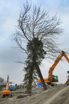 Buizerd is vertrokken uit zijn boom langs de A58