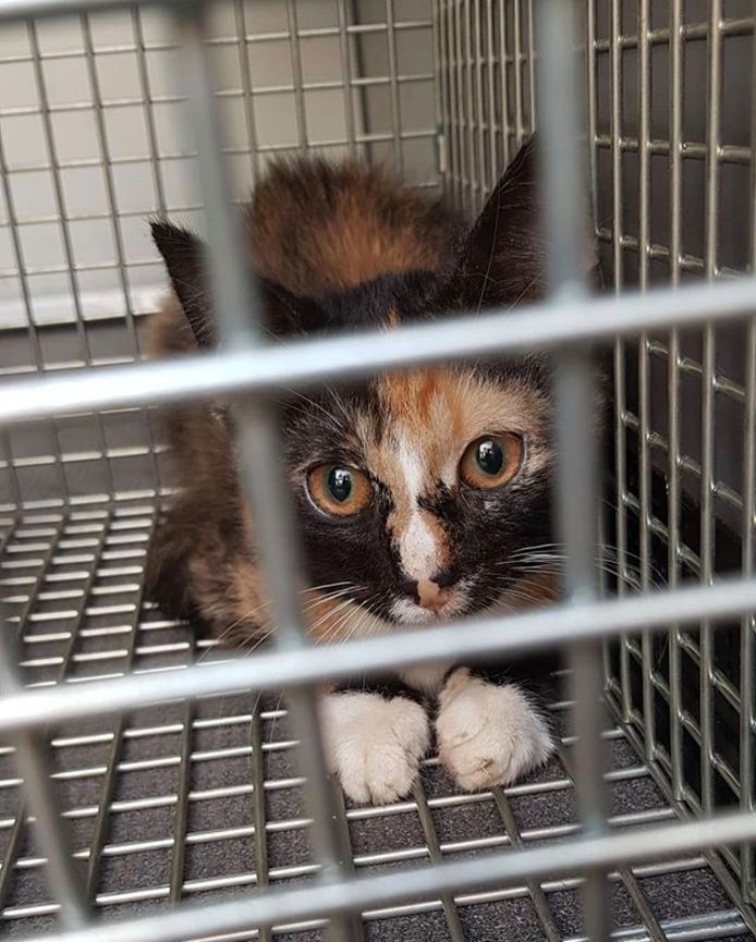 Dit jaar werden ook meerdere katten uit een woning in Oog in Al gered.