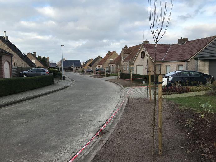 In de wijk Klokkeput in Ettelgem staan nu nieuwe kerspruimbomen.