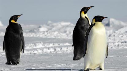 Chinese toeristen mogen niet langer jagen op Zuidpool