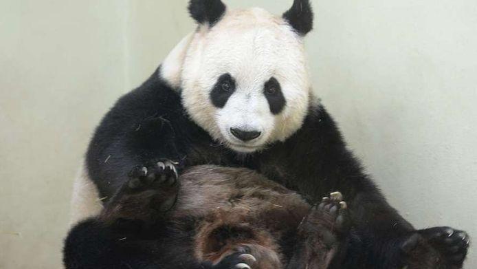 Panda's zijn het niet waard om gered te worden, beweert Timothy Lavin.