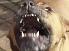 Montfoortse wijk in de ban van bijtgrage pitbull die andere hond doodde