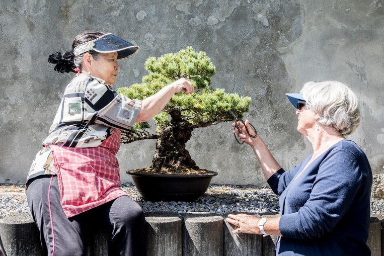 Bonsaivrijwilligers Emiko Kannan (l) en Hansje vanWeel: 'We hebben hier een mooie verzameling.' Beeld Lotte Bronsgeest