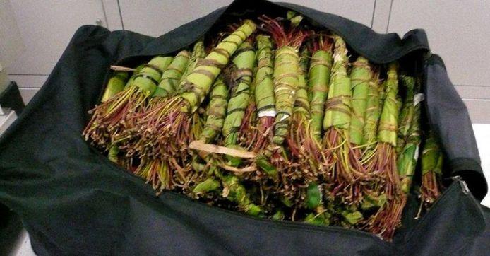 De khat zat volgens de Franse douane verstopt in vijftien sporttassen.