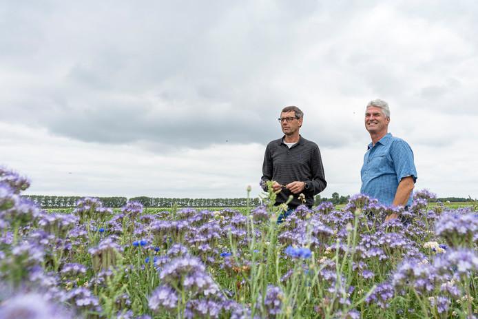 André Slootmaker (links), die het akkerrandenproject voor agrarisch Schouwen-Duiveland aanstuurt, en Helle van der Roest van Imkervereniging Schouwen-Duiveland in de bloemenrand bij het bedrijf van Slootmaker in Nieuwerkerk. Nu overheerst paars, maar ook klaprozen en zonnebloemen zijn er te zien.