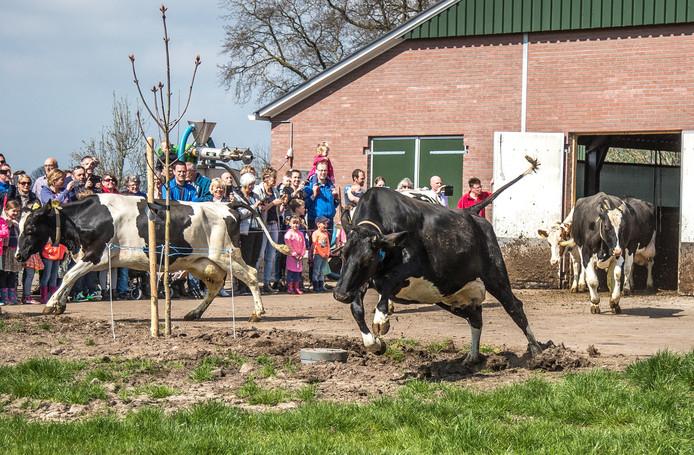 Vorig jaar kwamen zo'n duizend mensen kijken in Zwolle.
