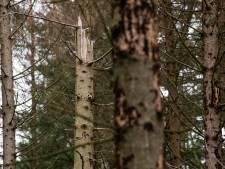 Steeds meer kritiek op massale bomenkap Sallandse Heuvelrug: plan in de ijskast