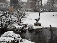 Winterprik strooit paar centimeter sneeuw in Antwerpen (maar zondag dooit het alweer)