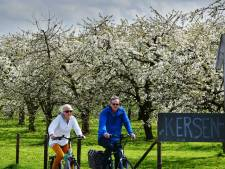 Fruitbomen in Krommerijngebied komen uitbundig tot leven