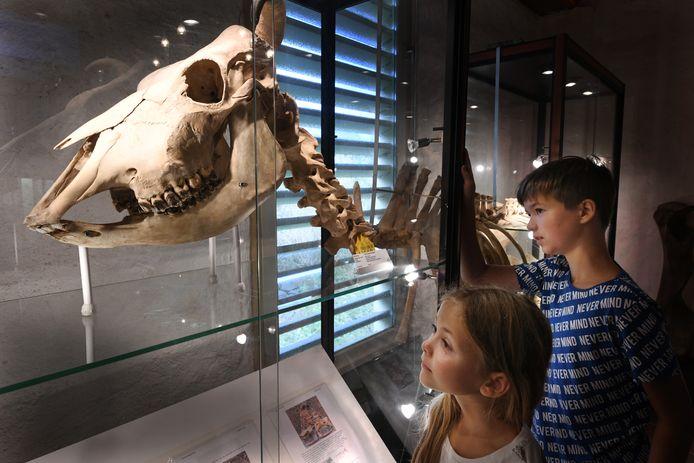 Wybe en Freya Schmidt bekijken een koe in museum De Oersprong.