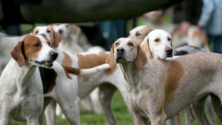 De eerste honden - tamme, speelse beesten in plaats van gevaarlijke wilde wolven - ontstonden waarschijnlijk in Europa Beeld getty