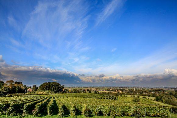 De wijnboeren uit de Westhoek serveren hun producten op het Wijn- en Eetfestijn.