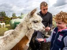 Alpaca-jong Bella in Nijbroek nog geen knuffeldier