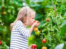 Den Haag deelt vrolijke doosjes groenten uit aan kinderen