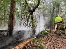 Bosbrand tussen Vught en Helvoirt onder controle