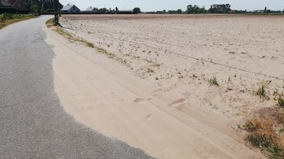 """Landbouwster Lieve zit met de handen in het haar door aanhoudende droogte: """"Mijn bietenveld lijkt meer op een strand"""""""
