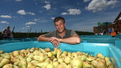 Ruslandboycot wordt vijf jaar: Haspengouwse fruittelers zijn wanhoop nabij