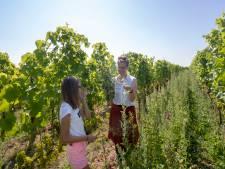 Wijnliefhebbers lopen door de wijngaard op zoek naar een boeket