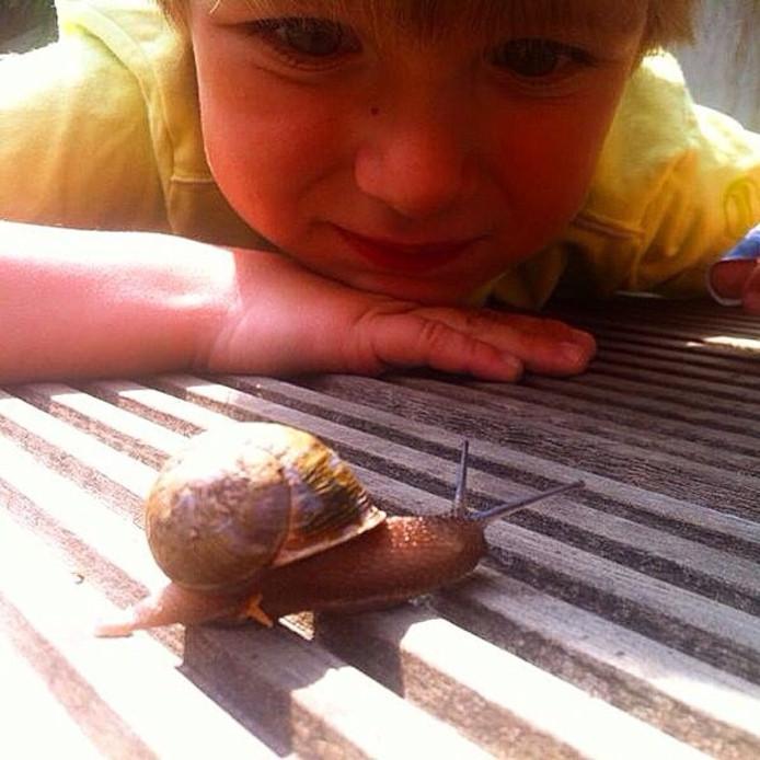 Maz bekijkt 1 van de slakken in onze (dak)tuin, lezersfoto 2014.