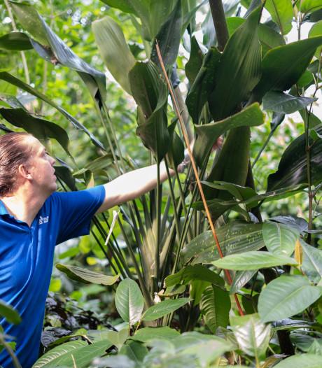 Ontdekking van Dracaena bushii is wereldprimeur voor Burgers' Zoo