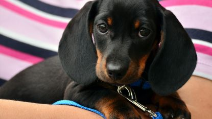 Nieuwe pup in huis? Zo voelt hij zich in no time thuis!