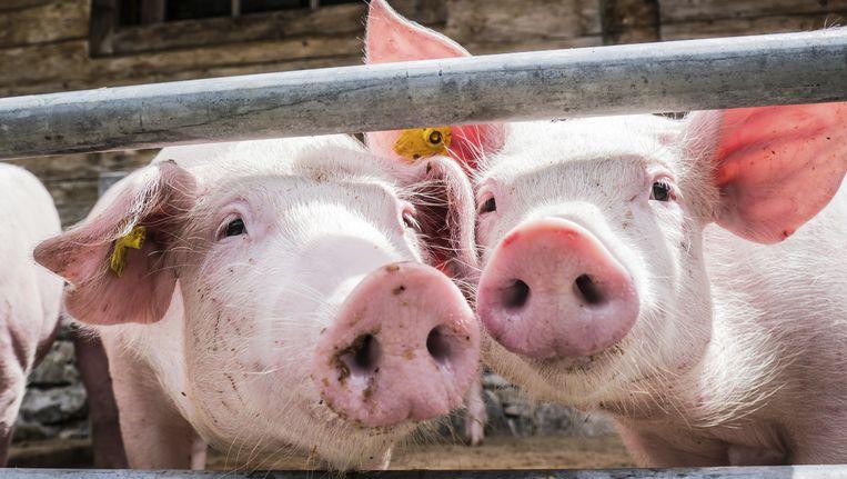 """""""Mensen willen niet meer betalen voor kwaliteit. Daarom proberen we de consument duidelijk te maken dat kwaliteit wel degelijk zijn prijs heeft"""", zegt de Boerenbond."""