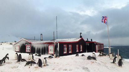 """Vlaamse (31) vertrekt naar Zuidpool voor 'coolste' job ter wereld: """"Postbode bij de pinguïns"""""""