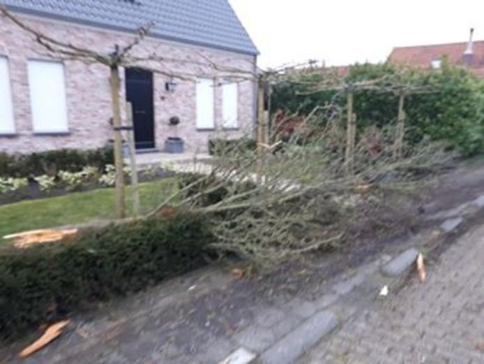 Opnieuw een ongeval op de Provincialeweg in Boerenhol. Dit keer reed een personenauto een boom over.