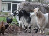 Dierenpark Klundert moet dieren verkopen om de huur te betalen