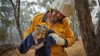 WWF België zamelt al 350.000 euro in voor slachtoffers van Australische bosbranden (maar let op voor de charlatans)