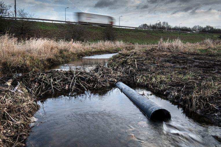 De dam die de bevers hebben aangelegd en de zwarte buis, de beaver deceiver, die het waterschap daarin heeft aangebracht, waardoor er toch water kan wegstromen. Beeld Koen Verheijden
