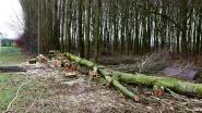 """Natuur en Bos kapt gezonde bomen langs de Leie: """"Dunningsactiviteiten om te dichte begroeiing te voorkomen"""""""
