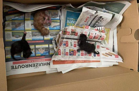 De kittens zijn op deze manier aangetroffen in een kartonnen doos, bij het vuilnis op de stoep.