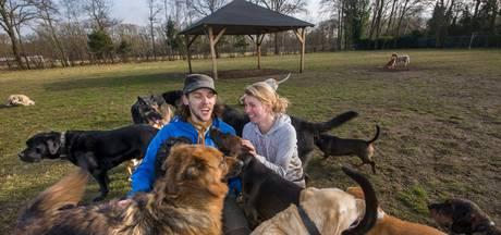 Hondenuitlaatservice laat uitlaatveld Cromvoirt schieten door één bezwaar: 'Kost emotioneel zo veel'